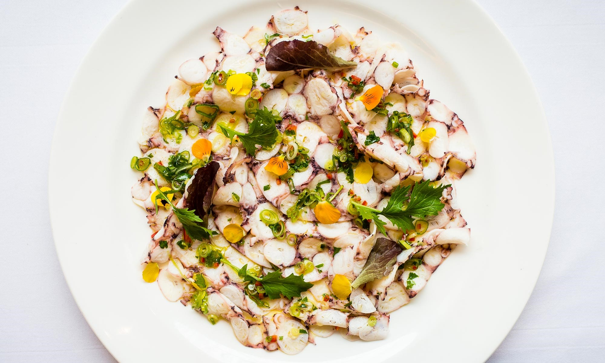 scotts octopus capaccio with chilli spring onion and coriander by paul winch furness